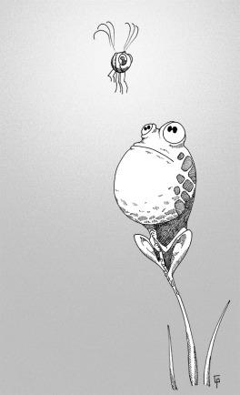 Une grenouille qui regarde une mouche.