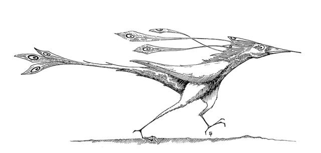 Un oiseau rapide.