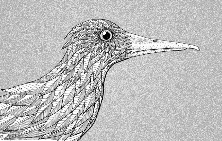 Un oiseau de profil.