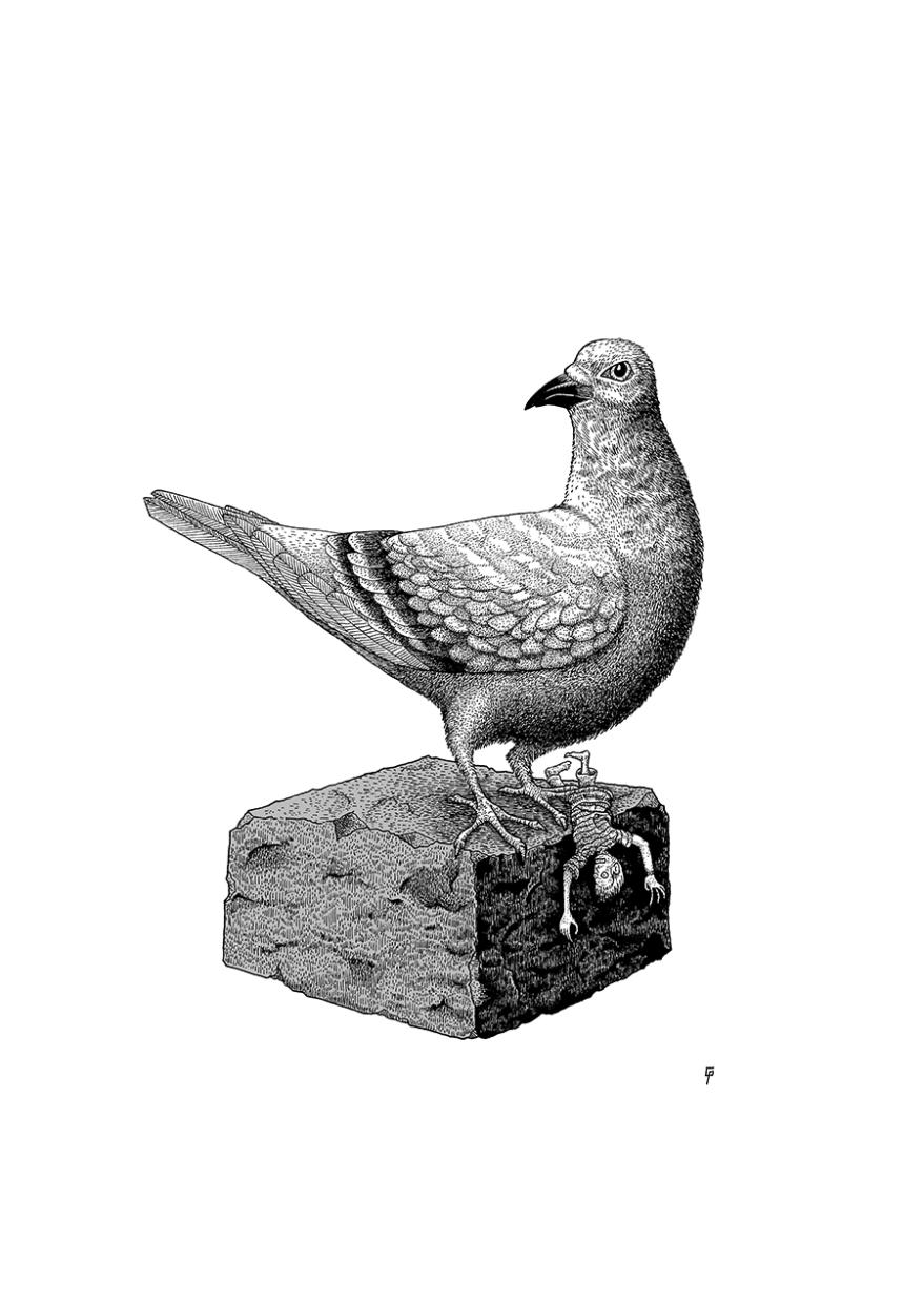 201803_02_pigeon_01_900px