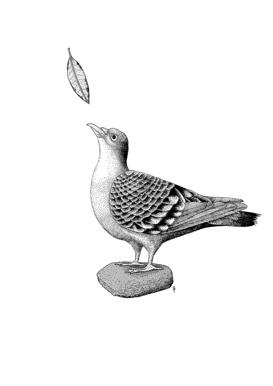 201803_03_pigeon_02_900px